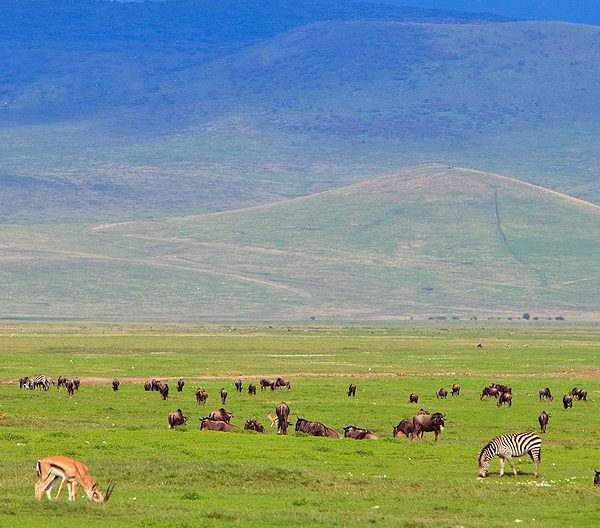 ngorongoro-crater-game-viewing