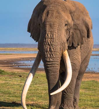 Giant Elephats spoted in Ngorongoro crater