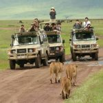 Ngorongoro crater lions are so amazing