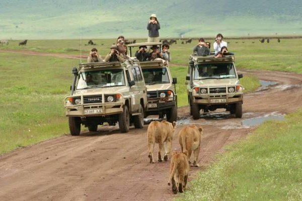 Ngorongoro crater lions are so amazing