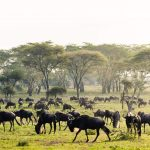 Serengeti Great migration tour with east safaris