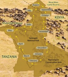 Great Serengeti maasai mara wildebeest migration