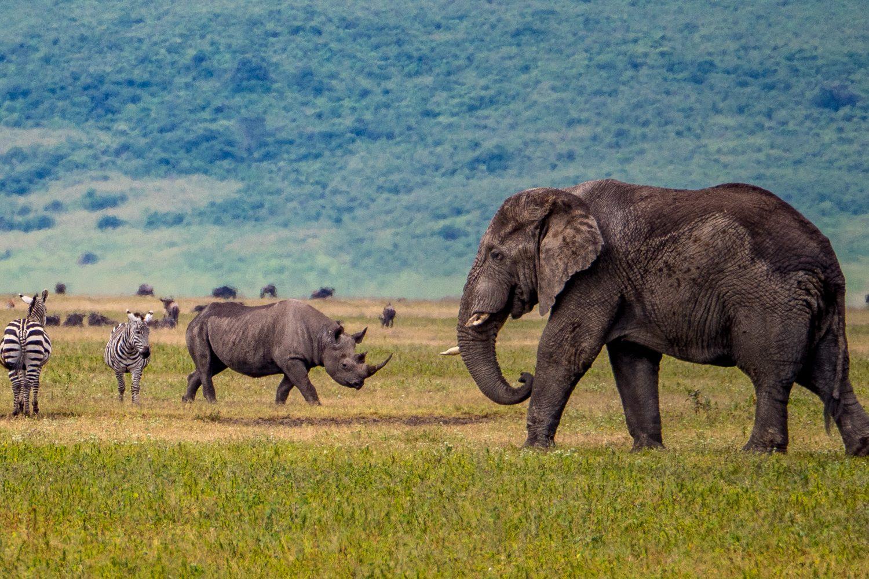Ngorongoro crater elephant and rhino