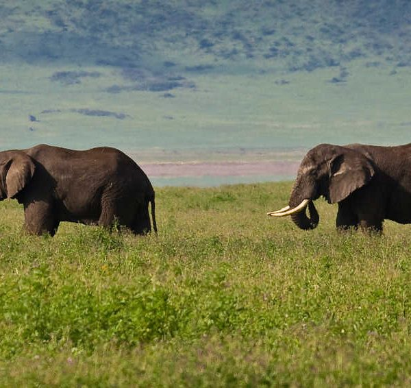 Tanzania adventure safaris