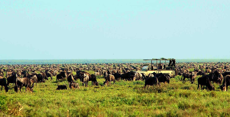 the great wildebeest migration - serengeti ndutu