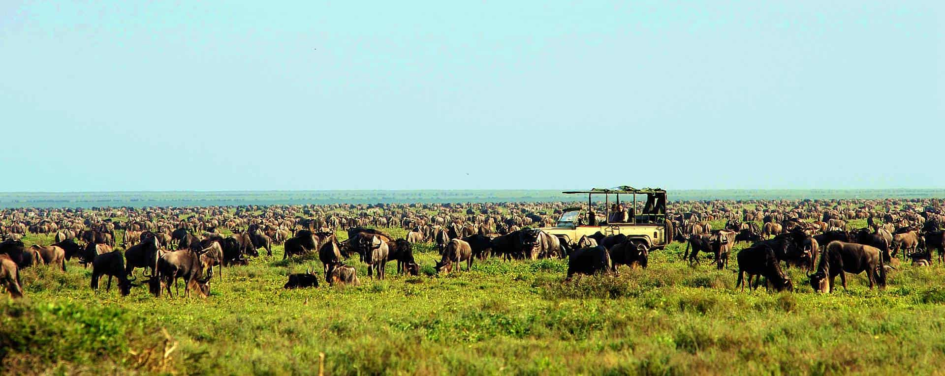 the great wildebeest migration - serengeti ndutu